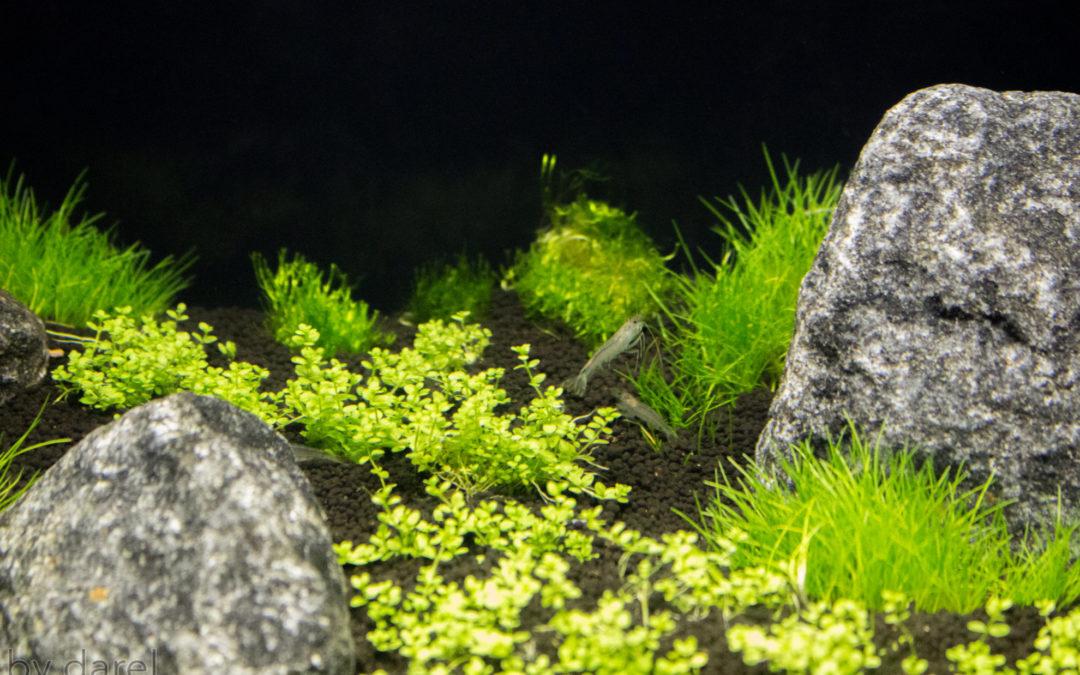 90 dage som planteakvarist – dag 7