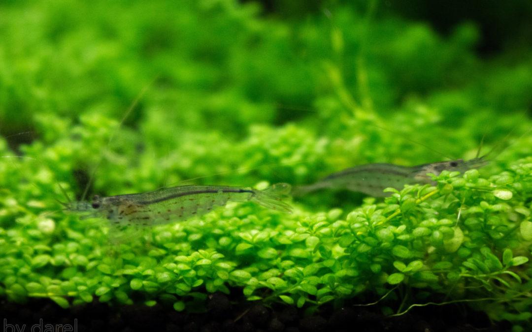 90 dage som planteakvarist med Akvarie West & Tropica